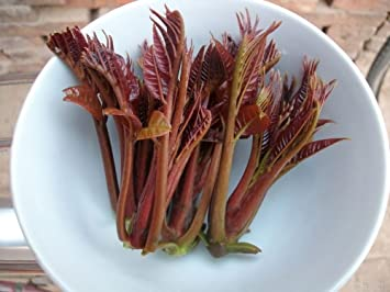 Amazon.com: nianyan baratos. Chino Toon semillas comestible ...