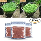 3 Pack Water Plant Seeds Glossostigma Hemianthus Callitrichoides Water Grass Seed Easy Aquatic Live Grow Plants Fish Tank Decoration Landscape Ornament Aquarium Decor Foreground … (Small Leaf)