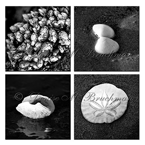 Beach Treasures Black and White Collection - Black and White Shell Photos - Beach House Wall Art - Beach Photos - Sea Shell Photo Sets ()