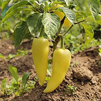 Hungarian Yellow Wax Sweet Pepper Garden Seeds - Non-GMO, Heirloom - Vegetable Gardening Seeds by Mountain Valley Seed