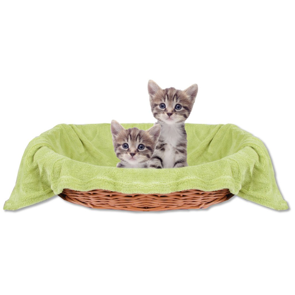 Bestlivings Haustierdecke Katzendecke Kuscheldecke Tierdecke, Angenehm und Super Weich in Vielen Verschiedenen Farben erhältlich