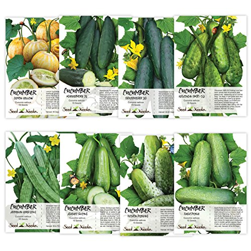 Seed Needs Cucumber Seed Packet Collection (8 Individual Packets of Cucumber Seeds) Non-GMO Seeds by Seed Needs