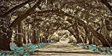 Tunnel of Trees - Brown Background - 9 Decor Colors, Canvas Wrapped, Home Decor Wall Art Floral Flower Pictures, Living Room, Bedroom, Family Room, Kids Room) (Aqua, 20x40)