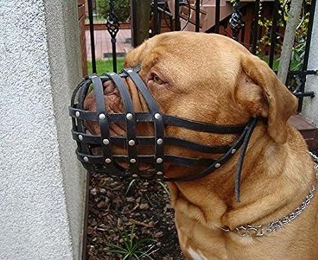 Museruola cane in pelle con luce per Torcia tascabile Dogue de Bordeaux Bullmastiff e altri
