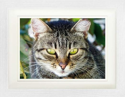 1art1 Gatos - Gata Atigrada, Retrato Póster De Colección Enmarcado ...