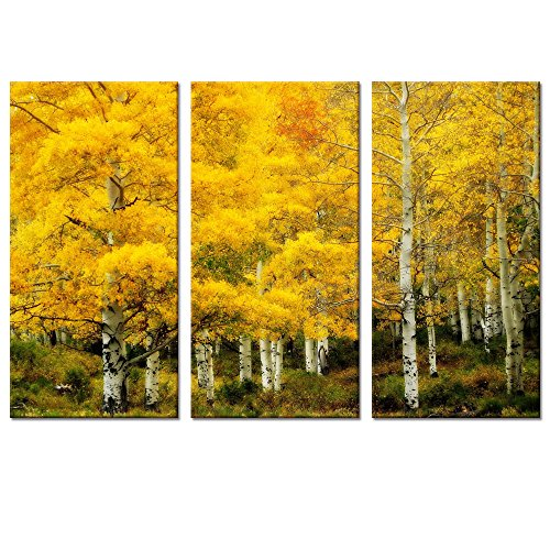Autumn Forest Scenery  Yellow Canvas Wall Art Birch Wall Art