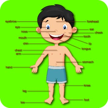 Amazon com: Teach Body Parts To Preschoolers And Toddlers - 1 To 5