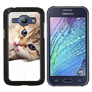 YiPhone /// Prima de resorte delgada de la cubierta del caso de Shell Armor - Maine Coon gatito lindo felino mascotas - Samsung Galaxy J1 J100