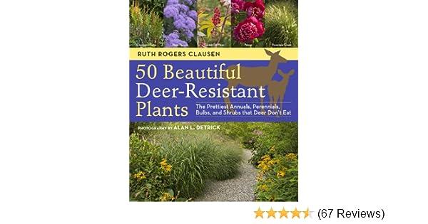 42780eed16da92 50 Beautiful Deer-Resistant Plants  The Prettiest Annuals ...