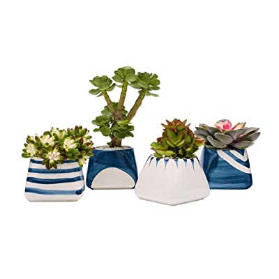 TOUCH MISS Ceramic Succulent Pots with a Hole,Plant PotsPack of 4,5.5x3.35x3.15 Inch White and Royal Blue Square: Garden & Outdoor