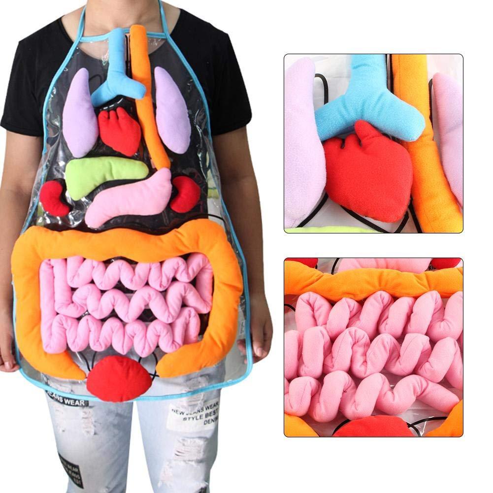 strumento educativo per casa Grembiule in 3D Voycheer prescolare e insegnamento per la consapevolezza degli organi del corpo umano