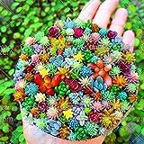 100 pcs/bag Real mini succulent cactus seeds rare succulent perennial herb plants bonsai pot flower seeds indoor plant for home