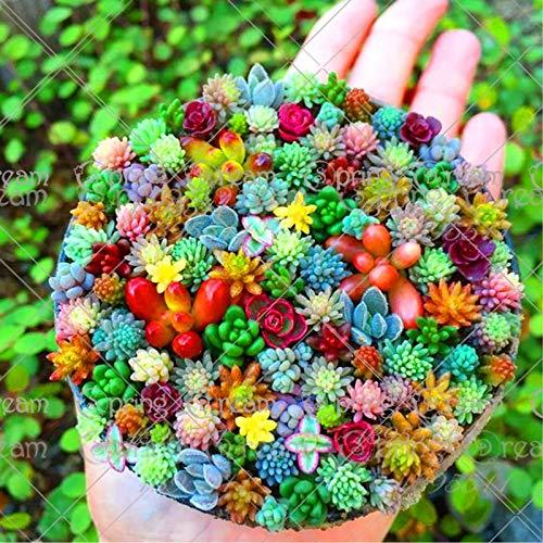 100 pcs/bag Real mini succulent cactus seeds rare succulent perennial herb plants bonsai pot flower seeds indoor plant for home ()