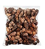 SuperMoss (24511) Black Spruce Pine Cones, 8-Ounce, Brown