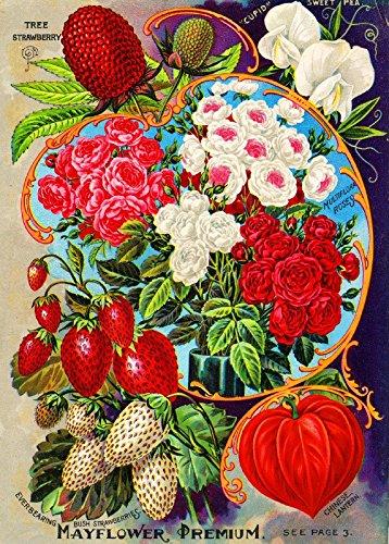 posters vintage flowers