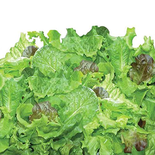Kit de capsules de graines de salades vertes traditionnelles (9 capsules) Miracle-Gro AeroGarden AeroGrow 809604-0205