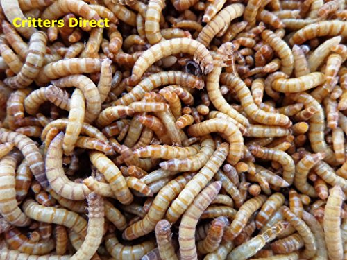 Mealworms 250 Gut Loaded !!! (Medium (1/2