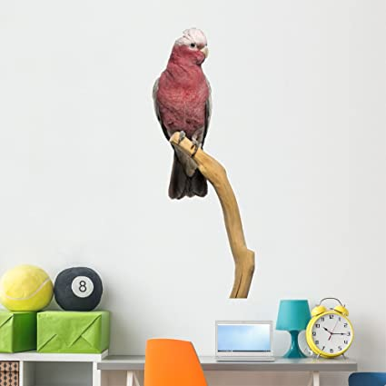 Amazon com: Wallmonkeys Rose-breasted Cockatoo 2 Years Wall