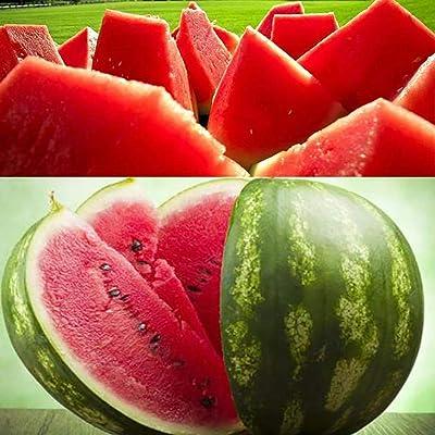 MelysUS Garden-10 pcs/Bag Red Watermelon Seeds Home Garden Plant Seeds Flowers : Garden & Outdoor