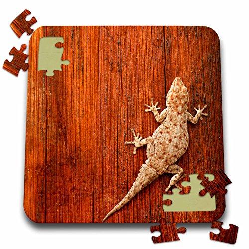 (3dRose Danita Delimont - Lizards - Tokay Gecko Lizard, Striated Wood, Africa-AF31 DSL0019 - David Slater - 10x10 Inch Puzzle (pzl_73116_2))