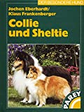 Collie und Sheltie