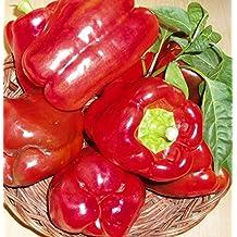 Seeds Red Sweet Bell Pepper Palanskaya Babura Organic Russian Heirloom Variety