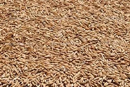 10LBS Winter Rye Seed Cover Crop,Food Plot Deer,Wildlife by Discount Lawn Care
