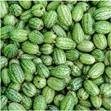Seed Needs, Cucamelon/Mexican Sour Gherkin