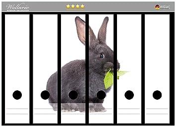 passend f/ür 6 breite Ordnerr/ücken Wallario Ordnerr/ücken Sticker S/ü/ßes Kaninchen mit Gr/ünzeug beim Futtern in Premiumqualit/ät Gr/ö/ße 36 x 30 cm