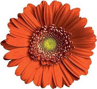 product image for Orange Daisy Wall Art