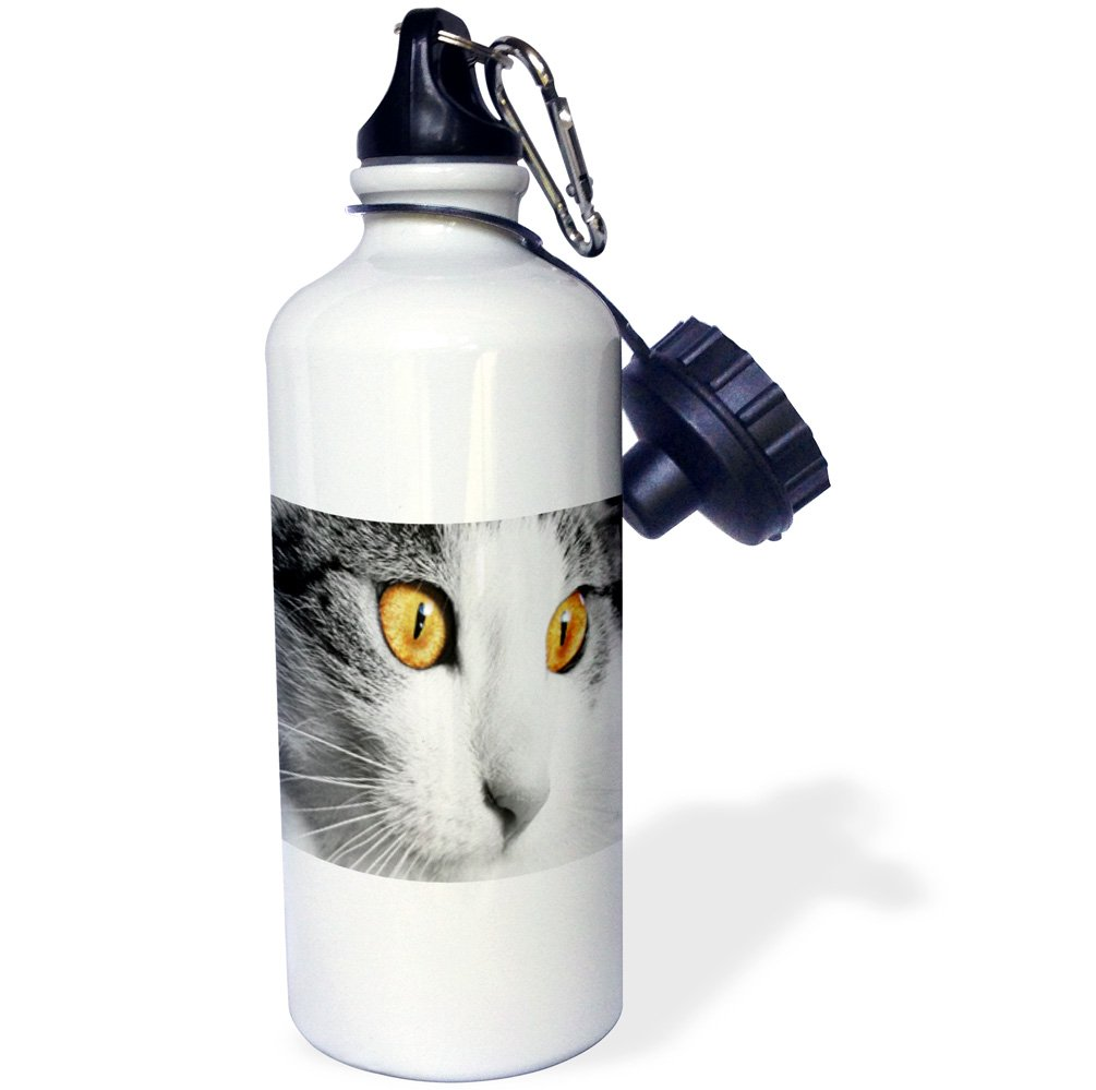 3dRose Florene Cat - Image of Extreme Close Up Of Gray Cat With Yellow Eyes - 21 oz Sports Water Bottle (wb_245057_1) by 3dRose