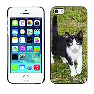 Super Stella Slim PC Hard Case Cover Skin Armor Shell Protection // M00149206 Kitten Animal Fur Little Kitty // Apple iPhone 5 5S 5G