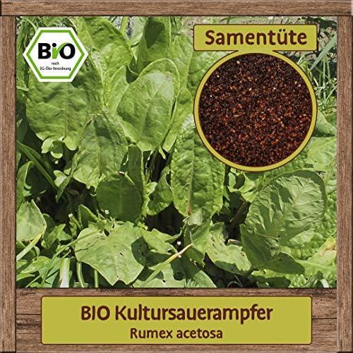 Samenliebe BIO Kultursauerampfer Rumex acetosa Saatgut samenfest in BIO Qualität ÖKO-DE-007 reicht für ca. 5m²