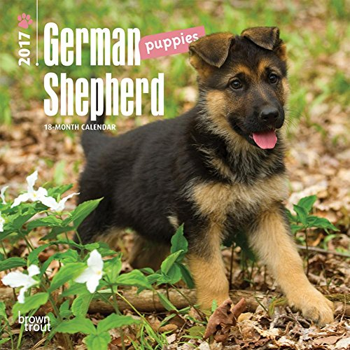 German Shepherd Puppies - 2017 Mini Calendar 7 x 7in