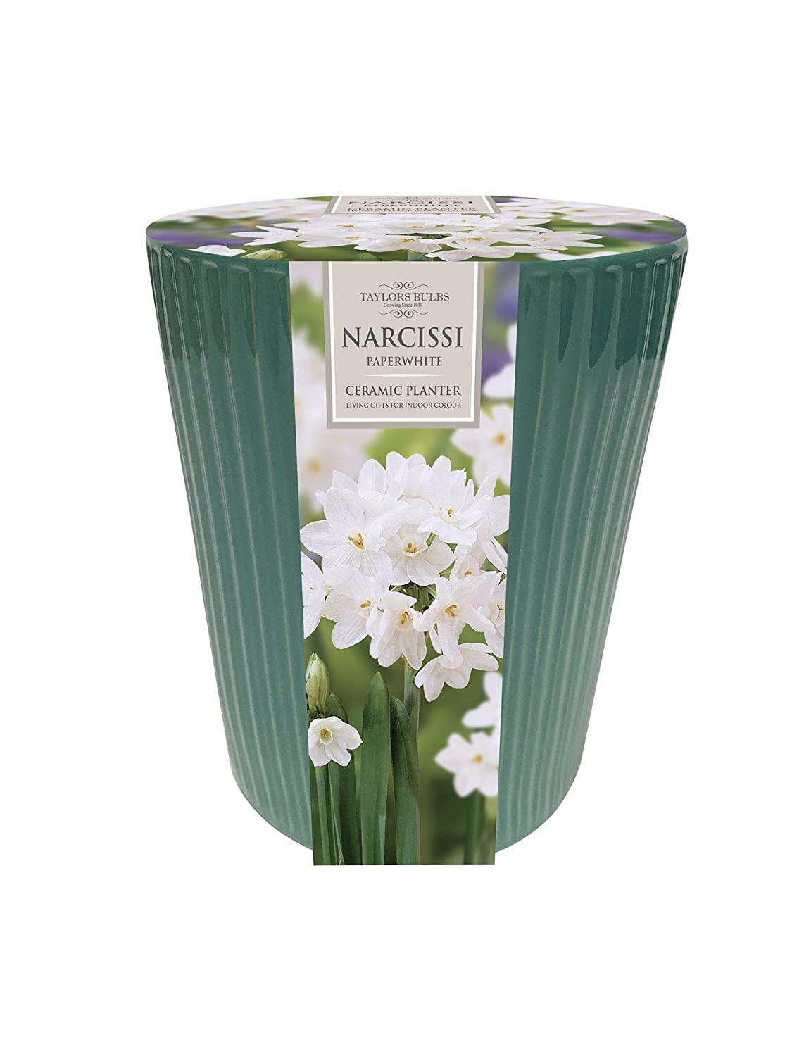 Indoor Paperwhite Ribbed Narcissi Planter Gift Set Taylors
