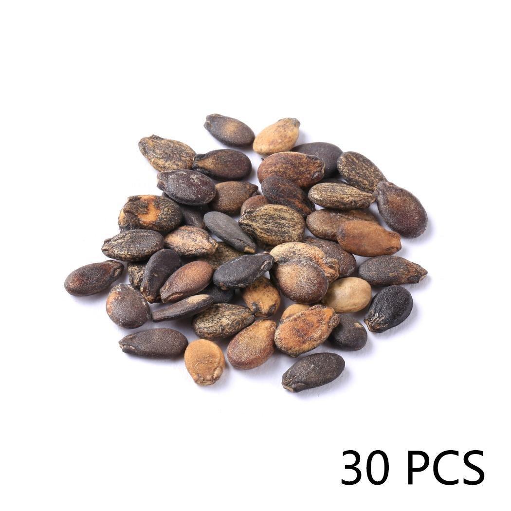 Kaimus Semillas de frutales,30pcs Semillas de Sand/ía Org/ánica Frutas Semillas para Balc/ón,Patio,Hogar y Jard/ín
