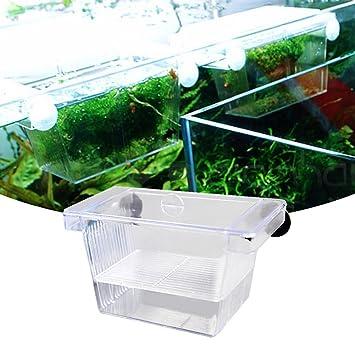 Incubator Box - Incubador de acuario para pecera (acrílico), diseño de Betta: Amazon.es: Jardín