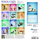 Yoga Cats Together 2018 12 x 12 Inch Monthly Square Wall Calendar by Plato with with Foil Stamped Cover, Animals Humor Cats