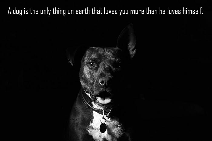 Amazon.com: Pitbull Dog Poster 13x19 Dogs Love You More Than ...