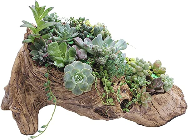 Blumentopf Holzstamm Optik  Bonsai Terrarium Deko