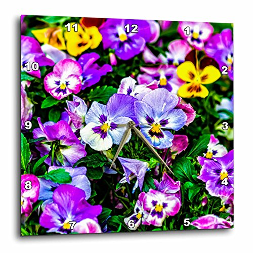 3dRose Alexis Photography - Flowers Pansy - Purple and blue pansy flowers on a flowerbed - 13x13 Wall Clock (Pansy Clock)