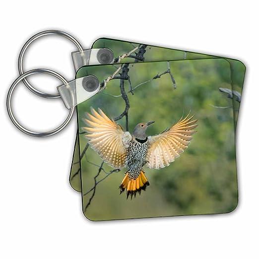 Amazon.com  Danita Delimont - Birds - Canada 9c584ae4c