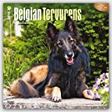 Belgian Tervurens 2016 Square 12x12 (Multilingual Edition)
