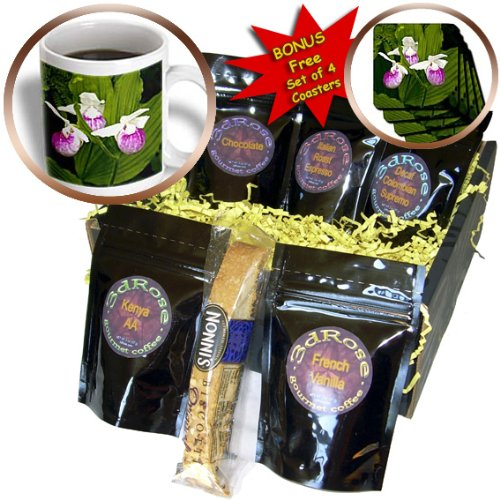 Danita Delimont - Flowers - MN, Itasca SP, Showy Lady-Slipper flower - US27 PHA0000 - Peter Hawkins - Coffee Gift Baskets - Coffee Gift Basket (cgb_92113_1) (Gift Baskets Mn)
