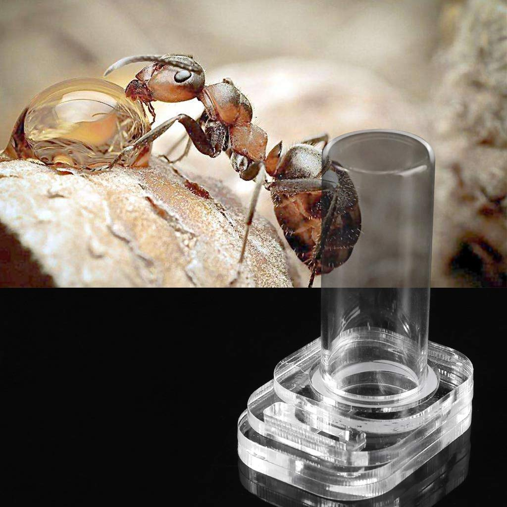 Nido di Insetti di formiche Ciotola di Alimentazione in Acqua per formiche per Animali da Compagnia Kafen Fourmire