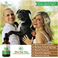 Hemp Oil For Dogs & Cats (375mg) - USA Veterinarian Formulated Organic Hemp Oil For Anxiety & Stress Relief- Arthritis Pain Relief - Hip & Joint Dog Supplement- Apply To Hemp Prime Treats