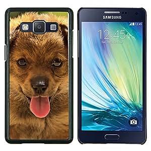 TECHCASE---Cubierta de la caja de protección para la piel dura ** Samsung Galaxy A5 ( A5000 ) 2014 Version ** --Boyero de Berna Pequeño perrito