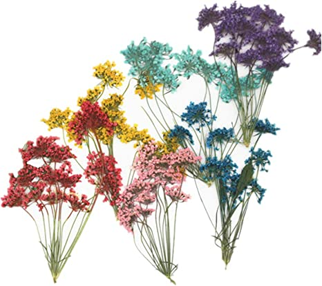 Real Dried Pressed Flowers,Assorted Colorful Natural Dried Flowers for Art Craft DIY Resin