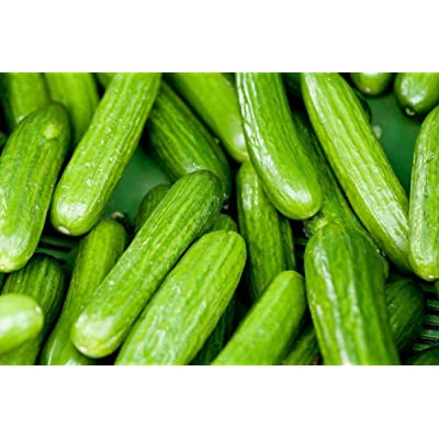 "Persian Middle East Cucumber Seeds high yields of 5 to 7"" long sweet Cucumbers!(25 - Seeds) : Garden & Outdoor"