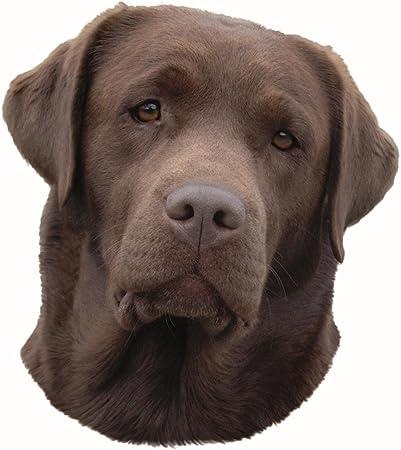 Trixie Aufkleber Labrador Braun Kopf Küche Haushalt